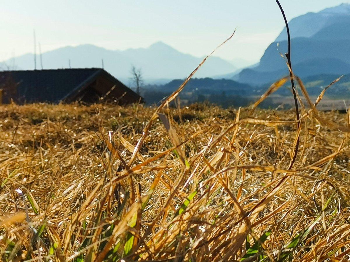 sunny days  #sunny #sunnydays #faakamsee #austria #kärnten #tinyhomes #goodvibepic.twitter.com/tNaPQyKU5k