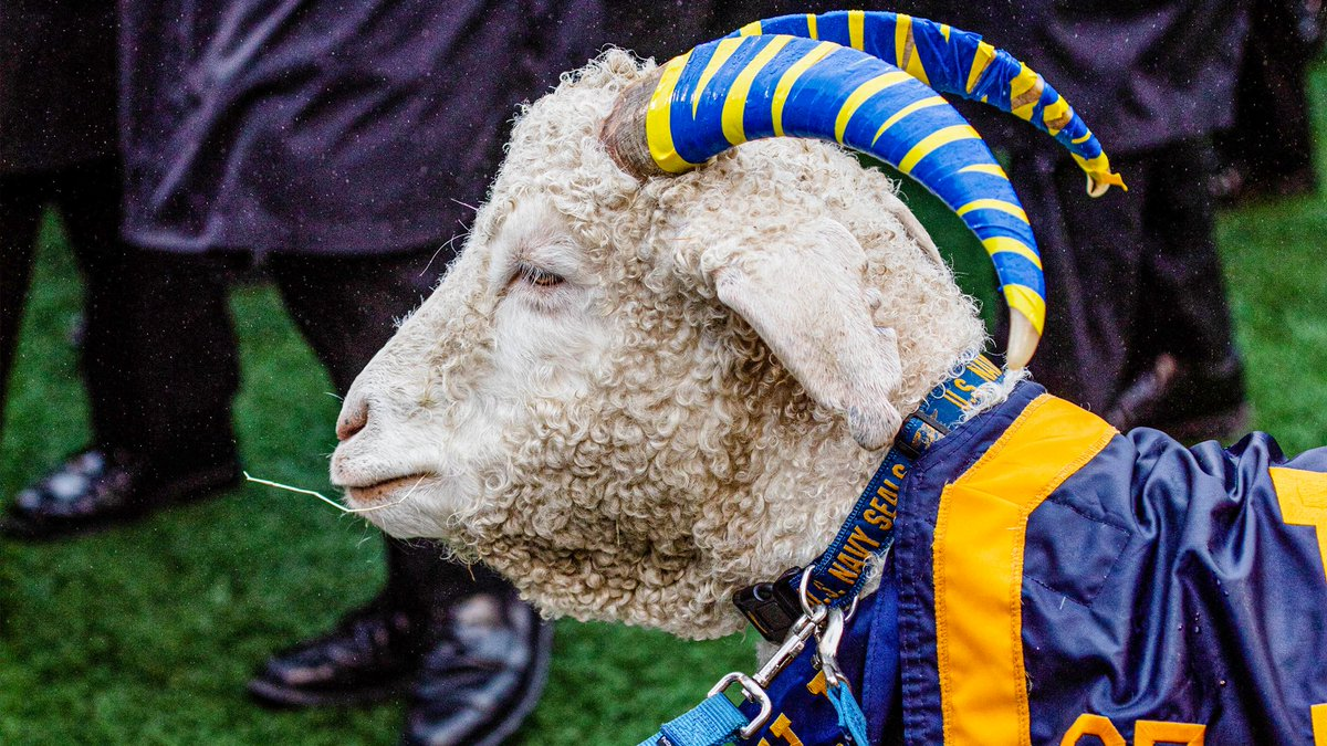 It's #NationalGoatDay. Consider this a four day holiday weekend 🐐🐐🐐🐐 #GoNavy