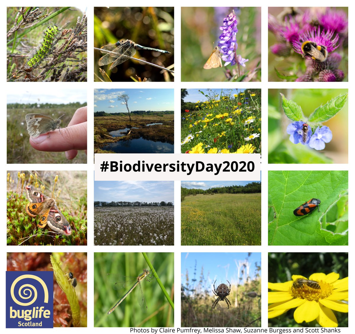 Peatlands & grasslands are vital for biodiversity & are 2 of the main habitats we are restoring through our projects. When managed properly these habitats are havens for a huge range of invertebrates & other wildlife, including many specialist species!#BiodiversityDay2020 pic.twitter.com/n17TV2x2MJ