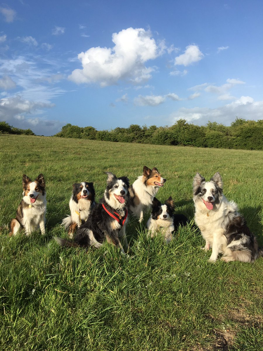 Evening walk. Collies and clouds ☁️