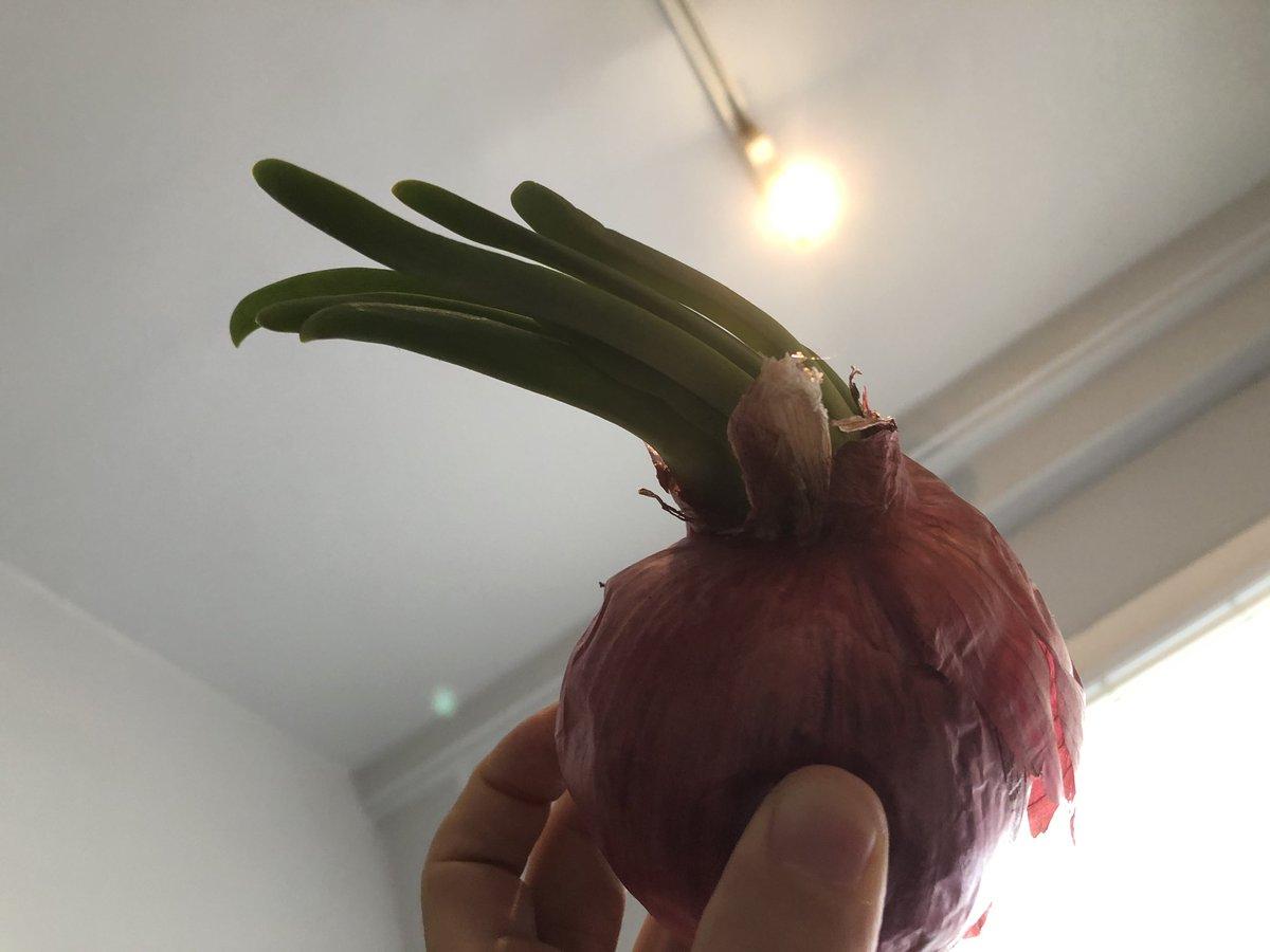が た れる 出 芽 玉ねぎ 食べ
