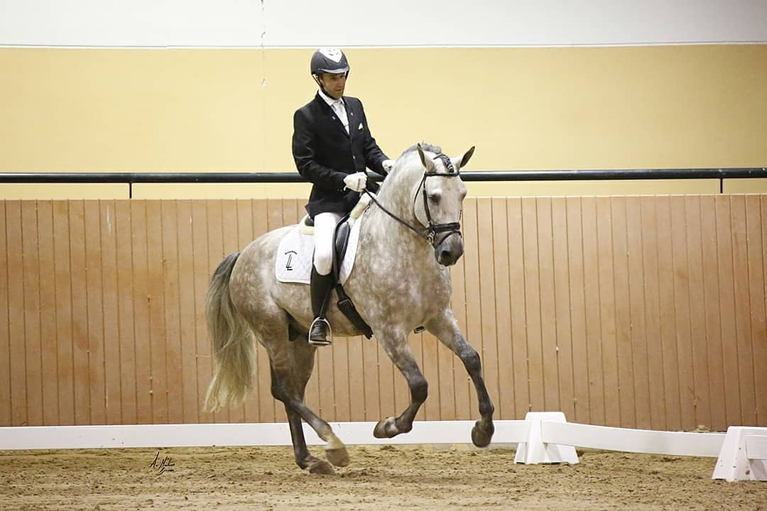 Hoy queremos compartir  con vosotros una gran notica... ¡Mexicano XVII es Joven Reproductor Recomendado por ANCCE!   Info: https://yeguadalezamaleguizamon.com/sementales/mexicano-xvii…   #CaballosPRE #CaballoEspañol #SpanishHorse #AndalusianHorse #cheval #doma #domaclasica #dressage #equestrian #ancce #horseforsalepic.twitter.com/3Htq6kpwQx