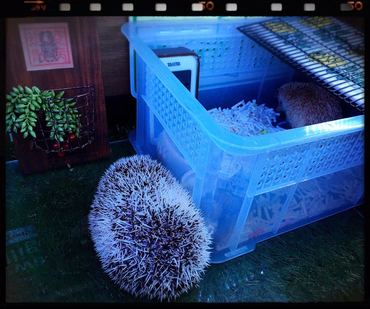 /   I came to see you. \ #hedgehog #アマビエ #スティンキー #Stinky #モラン #TheGroke #魔法少女 #Tokyo    #Japanpic.twitter.com/tXMWIQWXd4