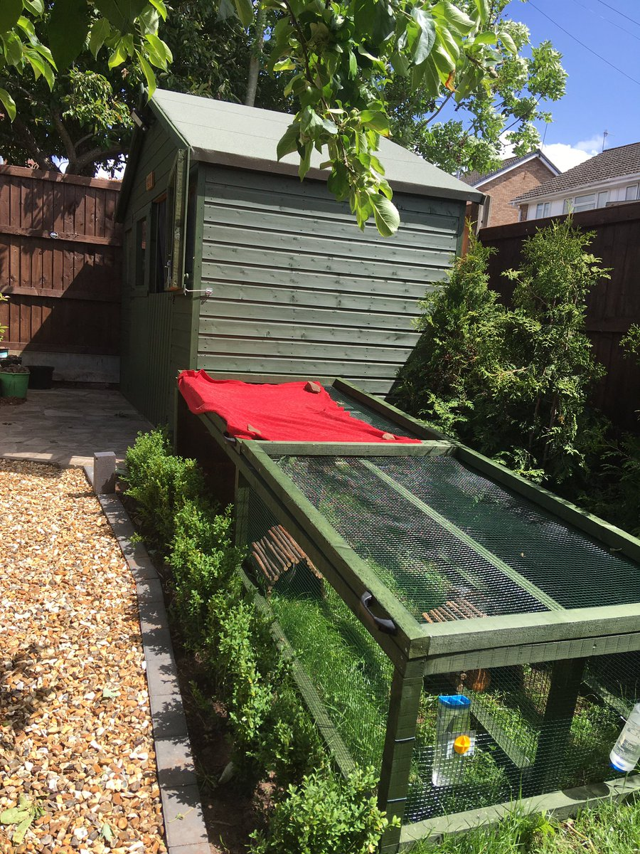It's been all go here at The Pad for your specialised #guineapig boarding needs. Since we're shut down, we've been hard at doing a New outdoor run - permanent residents enjoying the sun. #cavy #pighotel #pigboarding