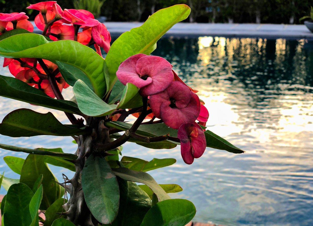 Every Flower Blooms In It's Own Time #IphoneX  RETWEET IF U LIKE IT pic.twitter.com/EYHXBqEwFC