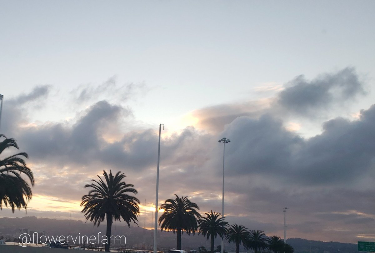 Sunrise on the Oakland #BayBridge. #palmtrees #palmspic.twitter.com/A6vAMk2h1l
