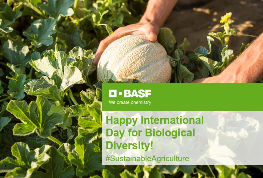 Happy #InternationalDayforBiologicalDiversity! Biodiversity is an important component of #sustainableagriculture and that is why BASF supports many initiatives to protect it and promote a sustainable use of natural resources. Curious? Discover more--> https://t.co/G0qLQuTMUm https://t.co/Y0FhNuGCVX
