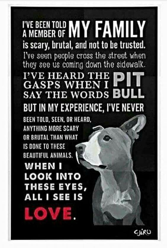 #UnKnownFamily #UnKn0wn #UnKn0wn_Truth #PitBullRights @pitbullsad @PitLoveOfficial @for_pittys @htfleming73 #americanbully #lovePitbulls 🐾🐾🐾🐾🐾🐾🐾🐾🐾🐾