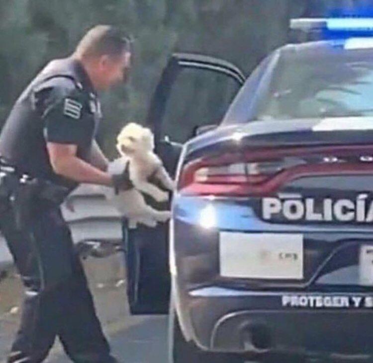 """""""Free my dawg"""""""