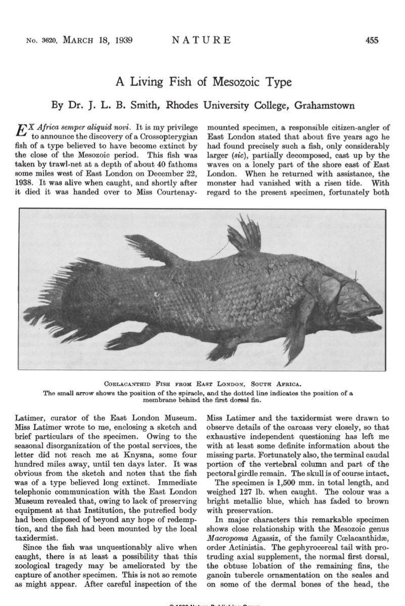 @art_storia @AMNH Ex Africa semper aliquid novi #nature    Zoological finding of the century #marjorie https://t.co/bdT45f3Sdr
