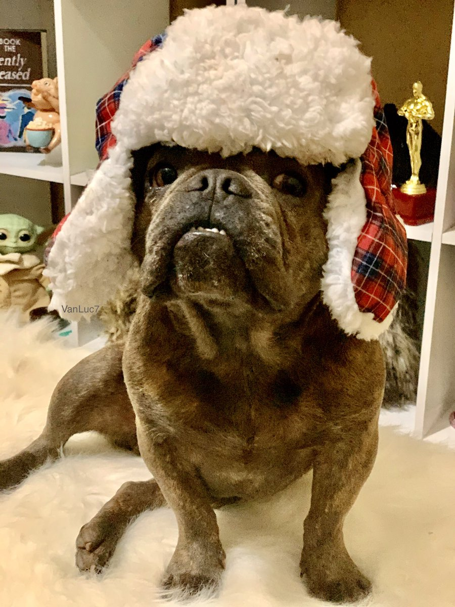 This lil Chunky Monkey got his #barkbox full of goodies and couldn't be happier! It came with this cute hat   Do you like it?   #FreeStuffFriday <br>http://pic.twitter.com/i7miboxuDY