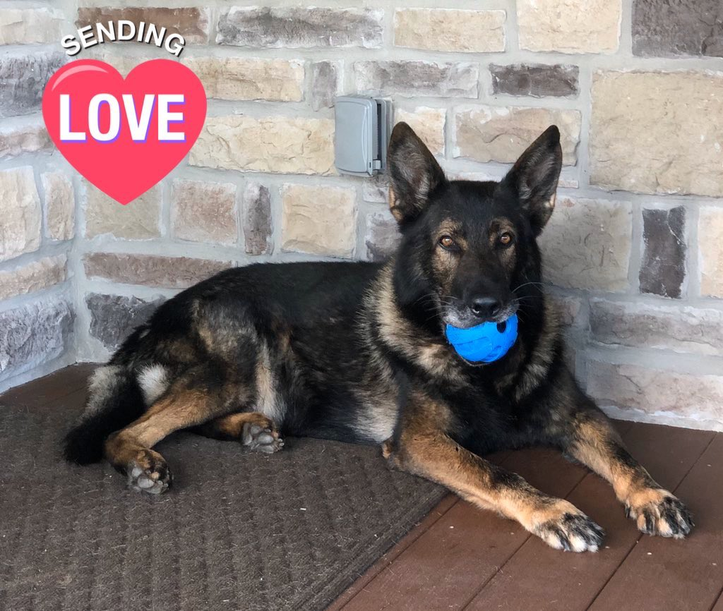 Who's missing their furry Police K9 #K9Lor?! I know I am. Drop a pic of your pups and send him a hello. #LivePd #LivePdNation @JamesCraigmyle<br>http://pic.twitter.com/f3OuZxQBhb