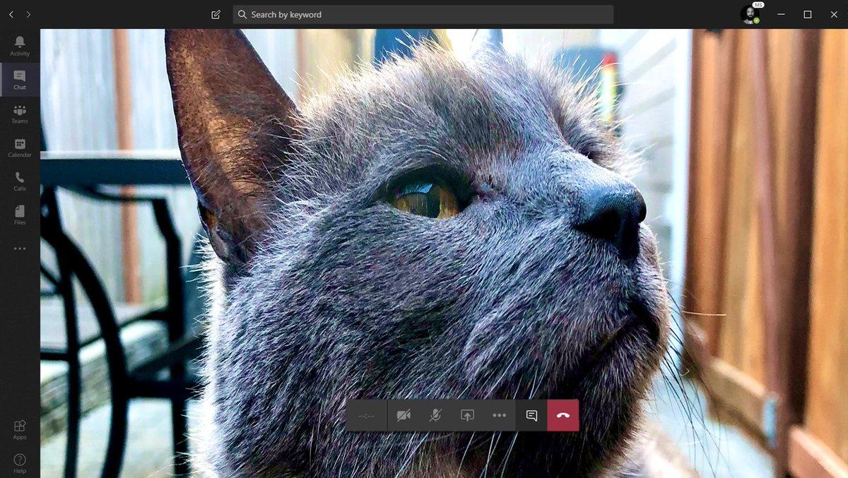 A cat having a video meeting on Microsoft Teams