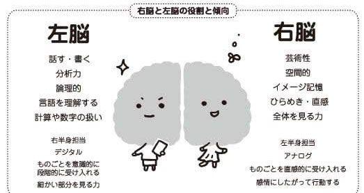 右脳 左脳 役割