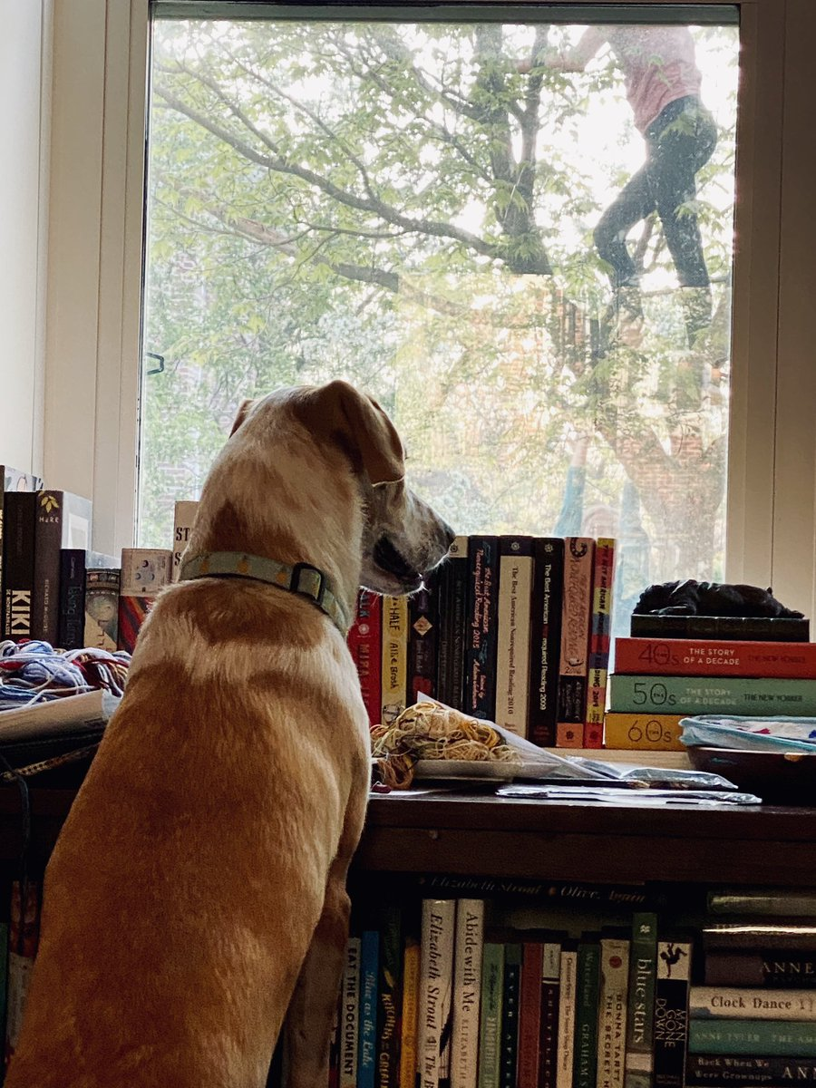 Extra-vigilant dog is ready to burst through window if children fall from tree; is hero.