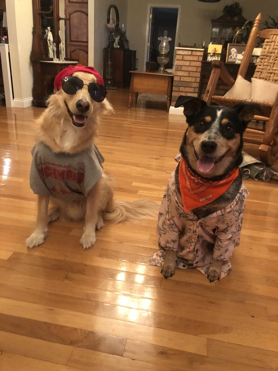 RT @Becca_Ramey99: @madelyncline #askmaddie do you like my dogs cosplay as JJ and John B? https://t.co/RyHAxWurFu