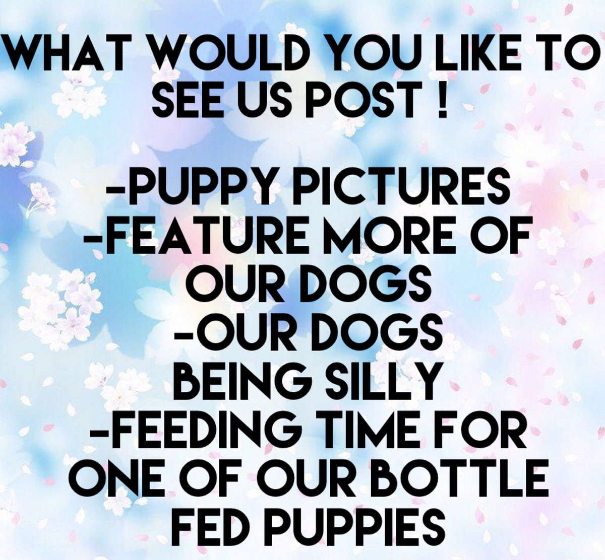 What would you like to see us post more about? #adoptdontshop #ilovedogs #dogrescue #happydogs #saveadog #savearescue #okinawa #okinawajapan #dogsofinstagram #donate #savelifes #love #lovedogspic.twitter.com/PxhOrFFe1O