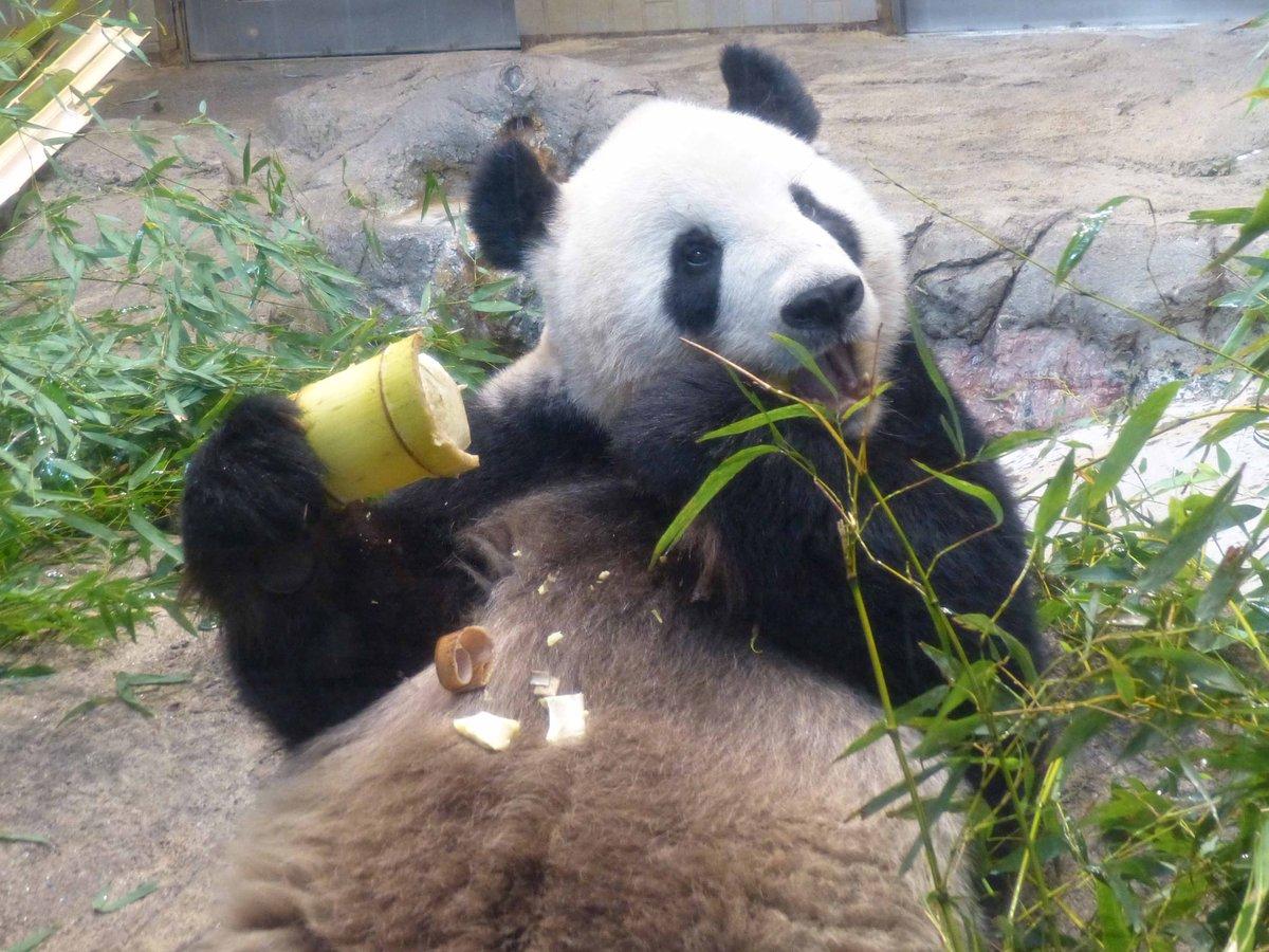 上野 動物園 ツイッター