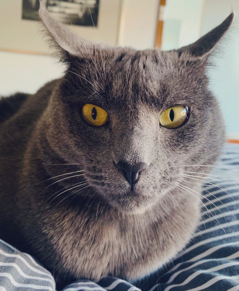 hmmm ... meow! ...   #cats #catsoftwitterpic.twitter.com/MULG9Apfk8