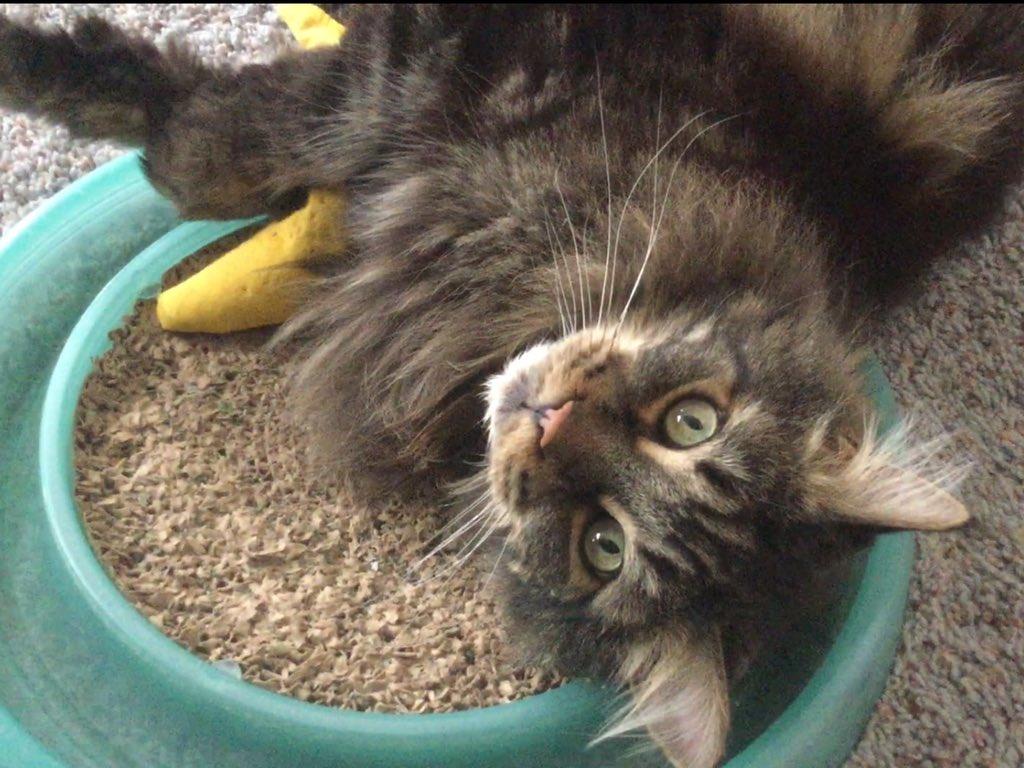 Wishing efuryone a playFULL, treat-filled, nap abundant #Caturday https://t.co/olvgAoYKti