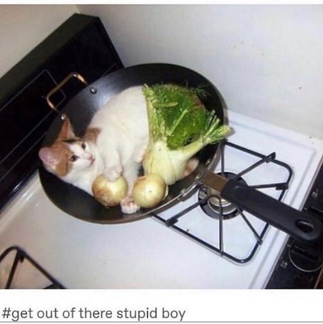 a balanced meal #gatos #cattopic.twitter.com/3w6kc7uAAB