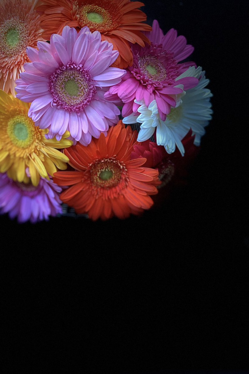 Gerbera's at home   by me <br>http://pic.twitter.com/iR3Ge9AcqN