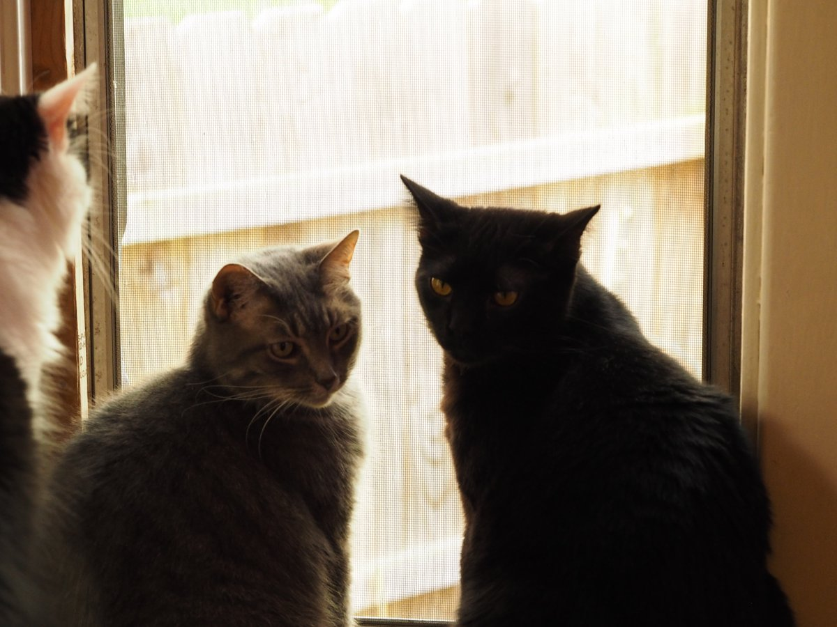 #Caturday Photo
