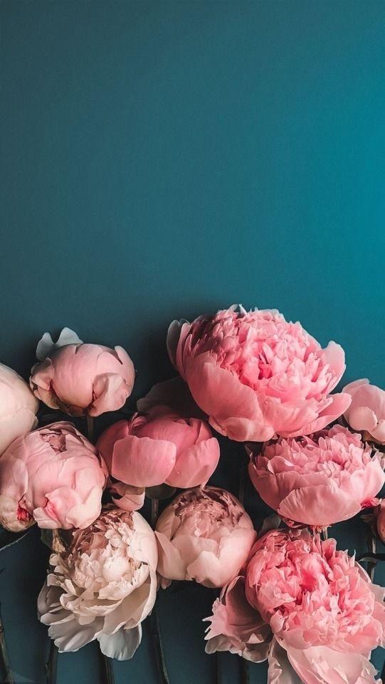 flowers #flowers #nature #flower #love #photography #spring #flowerstagram #naturephotography #art #garden #beautiful #photooftheday #plants #instagood #flores #flowersofinstagram #macro #like #instagram #wedding #roses #photo #floral #green #handmade #florist #beautypic.twitter.com/GP6hcHHKgP