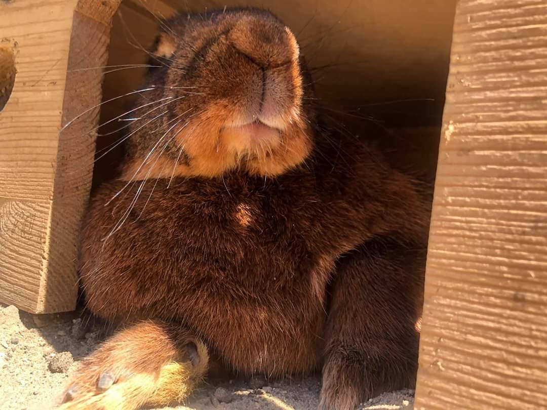 Ahhh jak błogo! Po prostu bosko!  Riju #relax #relaxing #sunnyday #rabbits #bunny #rabbit #bunnies #bunnyday #garden #gardeningpic.twitter.com/R28w33pxQd