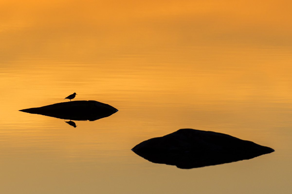 "Call this ""The dishwasher's victory""  or just bird at sunset!  #StormHour #weather #sweden #wildlifephotography #lake #sunsetpic.twitter.com/uq20Y865cM"