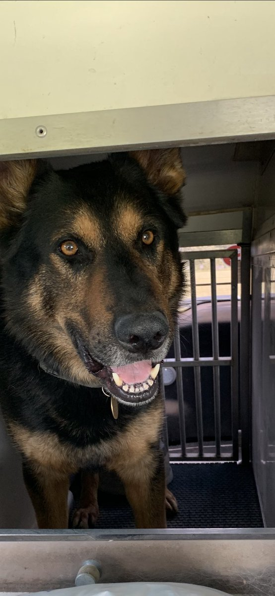 Please join us in wishing PD104 Harry a Happy 5th Birthday today, he's currently working but will get some treats tonight, #workingmybirthday #livingthedream HAPPY BIRTHDAY Harry !   #53 pic.twitter.com/clSKjQFmxW
