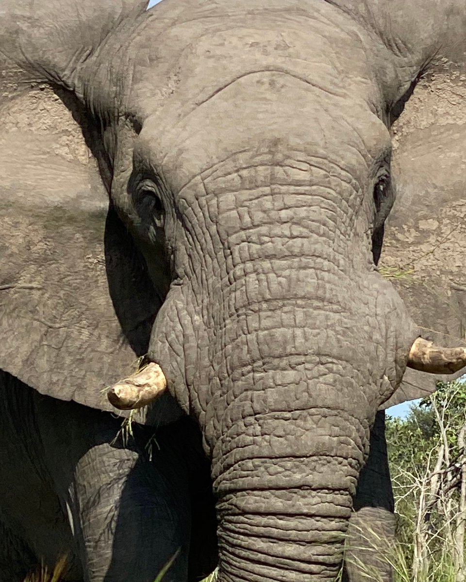 """""""Life is either a daring adventure or nothing at all."""" —Hellen Keller — #BraveAfrica #Travelquotes #ElephantLove pic.twitter.com/fmlqwGcfrL"""