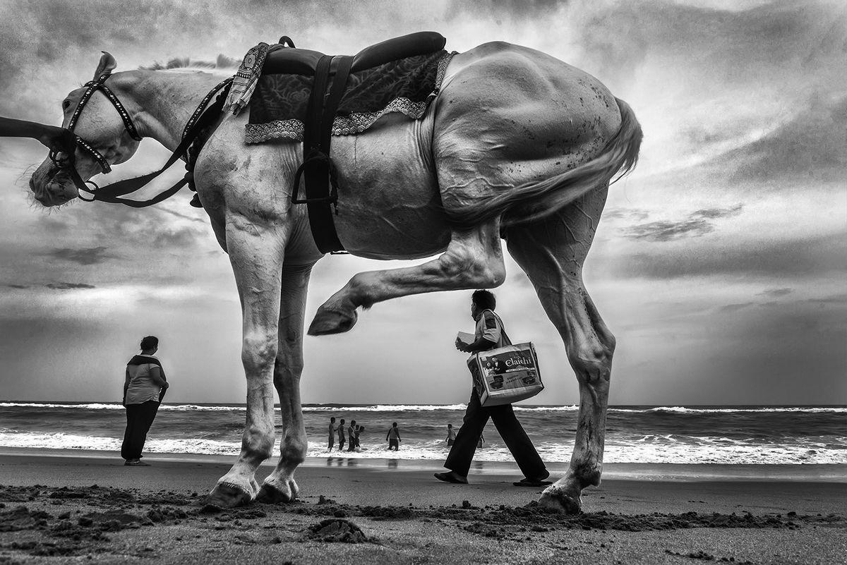 #photo #photography #life #blog #nature #familiarity #art #architecture #poetry #sculpture #landscape #artist  A Horse On A Beach In India. Photo: Raj Sarkar/Eyeshot-Street Photographypic.twitter.com/91ouCar5pQ