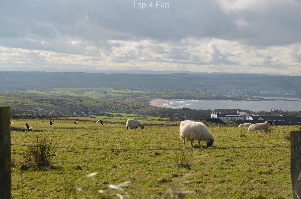 Sheeps - Giant Causeway - Ireland #PicOfTheDay #Foto pic.twitter.com/ATGeos1BDd