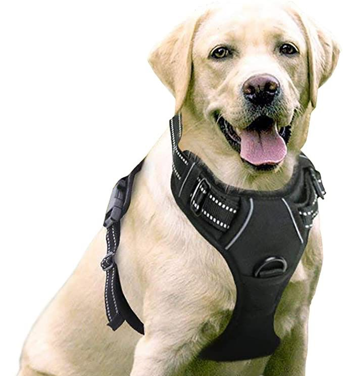 rabbitgoo No-Pull Dog Harness Padded Adjustable Pet Vest Harness with Handle Front Clip Harness for Large Dogs Training    https://buff.ly/3gb5nsA    Amazon  #dog #pet #petsupplies #dogs   #doglife  #doglove  Click here for pet supplies   https://buff.ly/2WMSWvfpic.twitter.com/5890JzVxGd