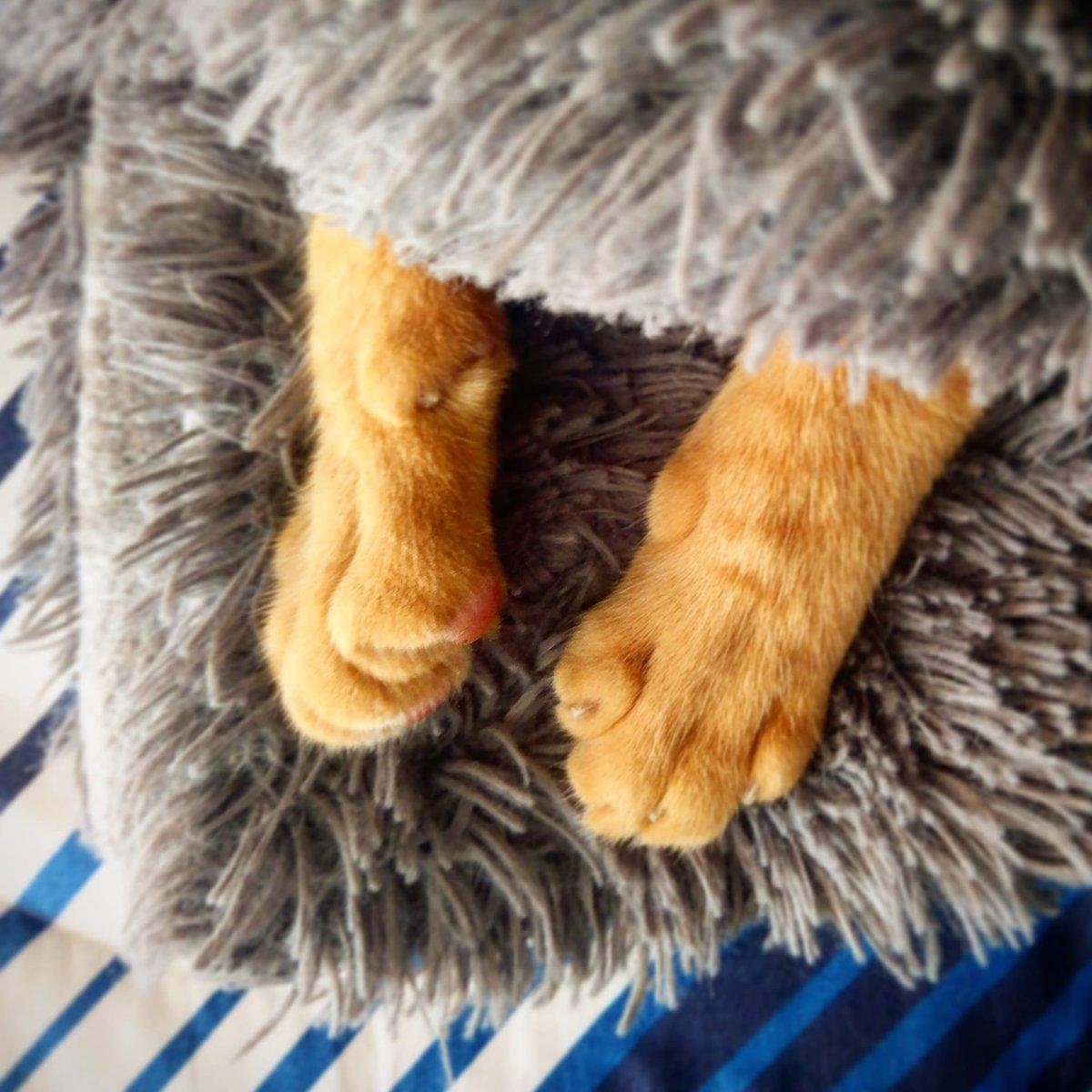 Sunny... #cats #gatos #lovecatspic.twitter.com/HKfwUrW9rn
