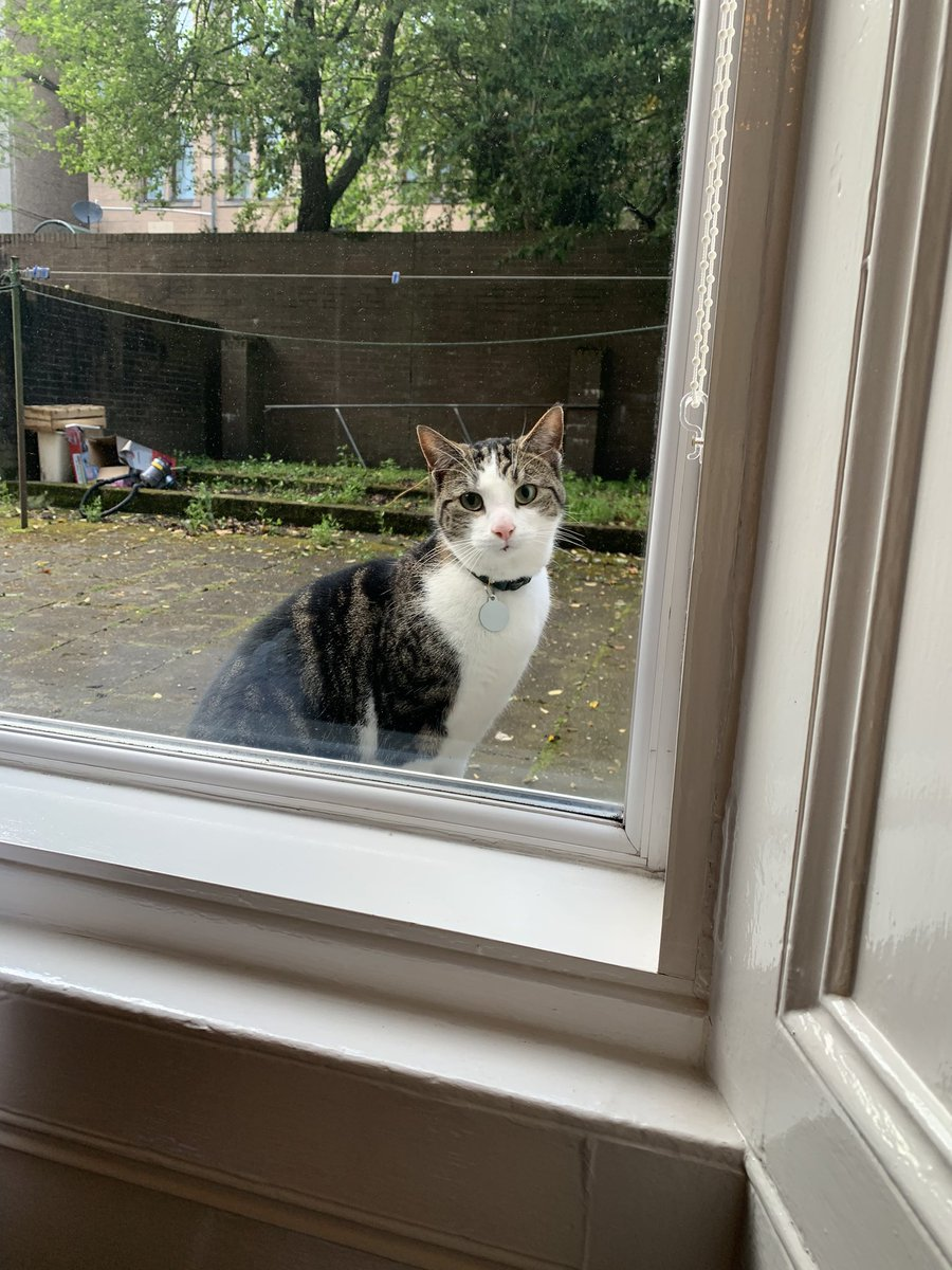 Lads, this cat came to my window earlier (I know, #blessed) and when I leaned in to see his name tag it said - I shit you not - Mixu Caatelainen. I'm so happy. pic.twitter.com/7ImM2bAQzn