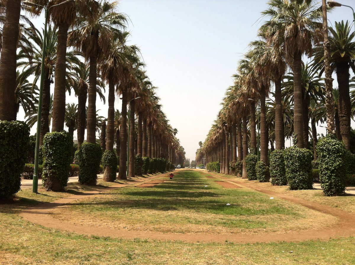 A line of Trees that forms an upside down triangle that I took in #casablanca #Moroccopic.twitter.com/7oN26SLLQ4