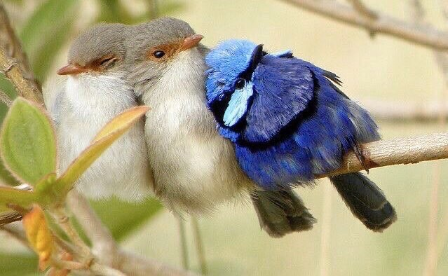 ❦We share this moment in common with every living thing, and in this moment we can choose compassion. ~Anne Scottlin #love #nature #photo #anon #FairyWren #saturdaymotivation #inspiration #lovepic.twitter.com/Z1airb0FHw