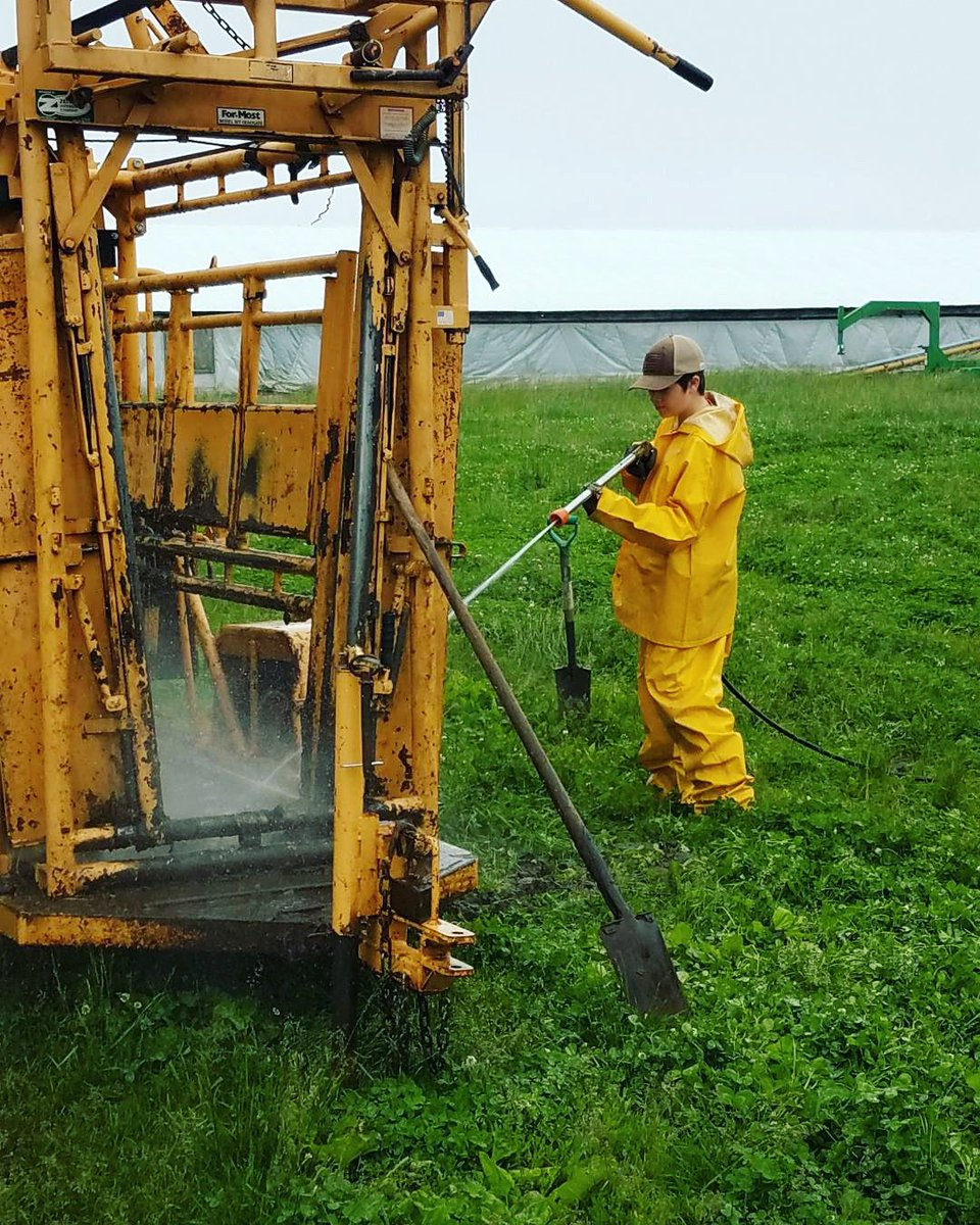 Cleaning the cattle chute... A dirty job, but someone has to do it 🤣