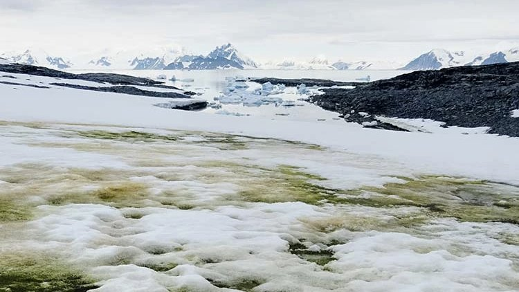 Climate change is causing more green snow to appear in Antarctica: bit.ly/2A0hEzw