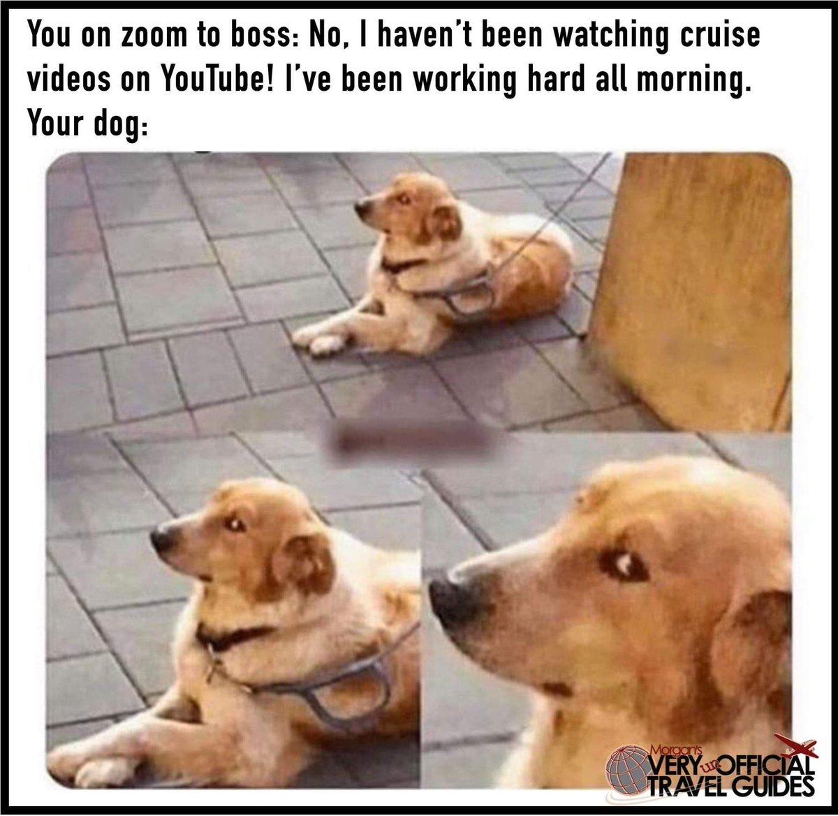 Definitely guilty. #cruise #cruiseship #zoommeeting #dogmemepic.twitter.com/Bvpdp6Ip2X