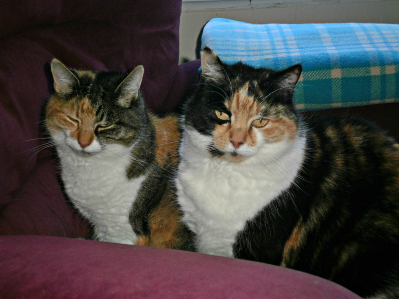 Anyone order some torties!? Here's our two for one cat special! #pet pic.twitter.com/5EO70tKyuR