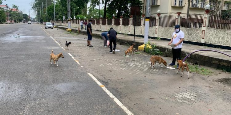 Puhor, an organization of dog lovers from #Assam goes about feeding the stray dogs in and around #Jorhat town amid the ongoing nationwide #lockdown.  #Northeastindia #Doglovers #straydogspic.twitter.com/xfZj8mUKRM