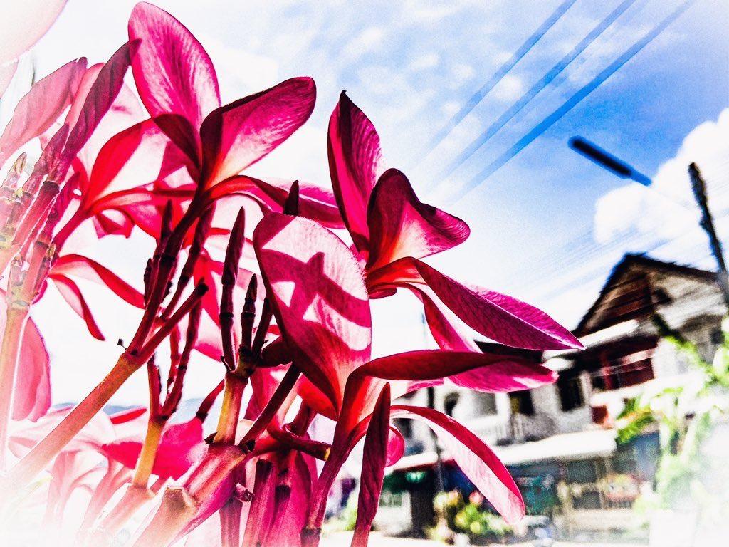 Good Sunday    .......stay safe everyone   #Flowers  #byoui pic.twitter.com/g2KoDXuLF9