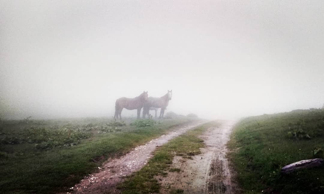 Who's gonna ride your wild horses. Sunday Morning mist #live @ Gura Diham. pic.twitter.com/w0JE3PHsCv