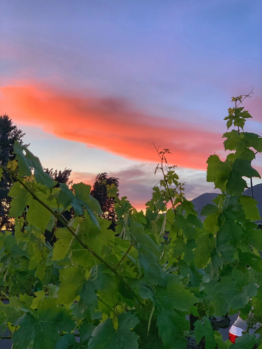 Sunset in Calistoga #NapaValley pic.twitter.com/Y8t0NlHewM