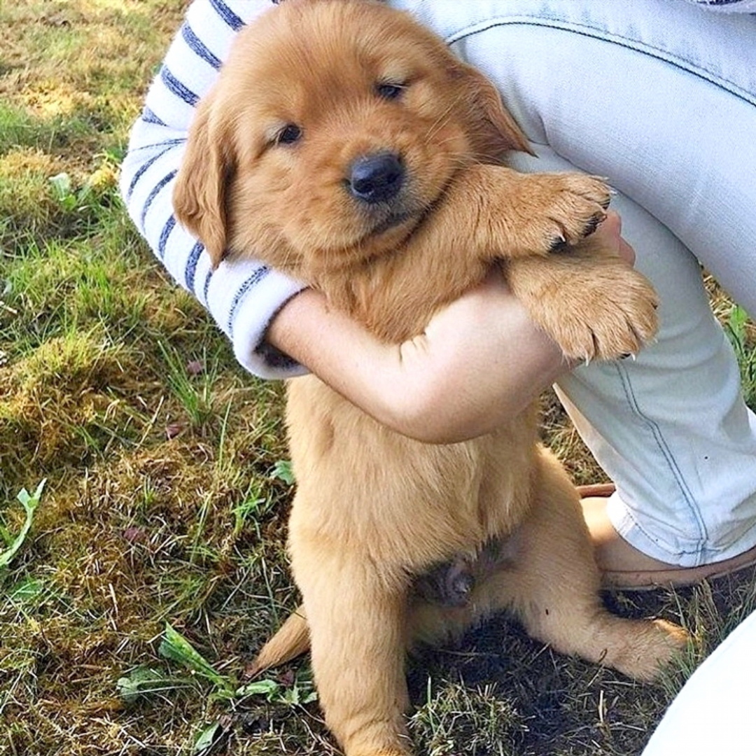 Show your Love to cute, small and adorable Puppies … #doglovers #dogsoftwitter #dogsluver #petsluver #pets #dogs #puppiesofinstagrampic.twitter.com/SvF11xNsIY