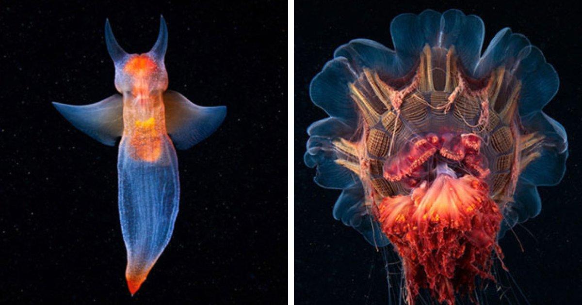 The Alien Beauty Of Underwater Creatures In Alexander Semenov Photos (91 Pics) https://bit.ly/3gmntrM #MarineLife #Photography #UnderwaterPhotography pic.twitter.com/JzNd8e2zEt