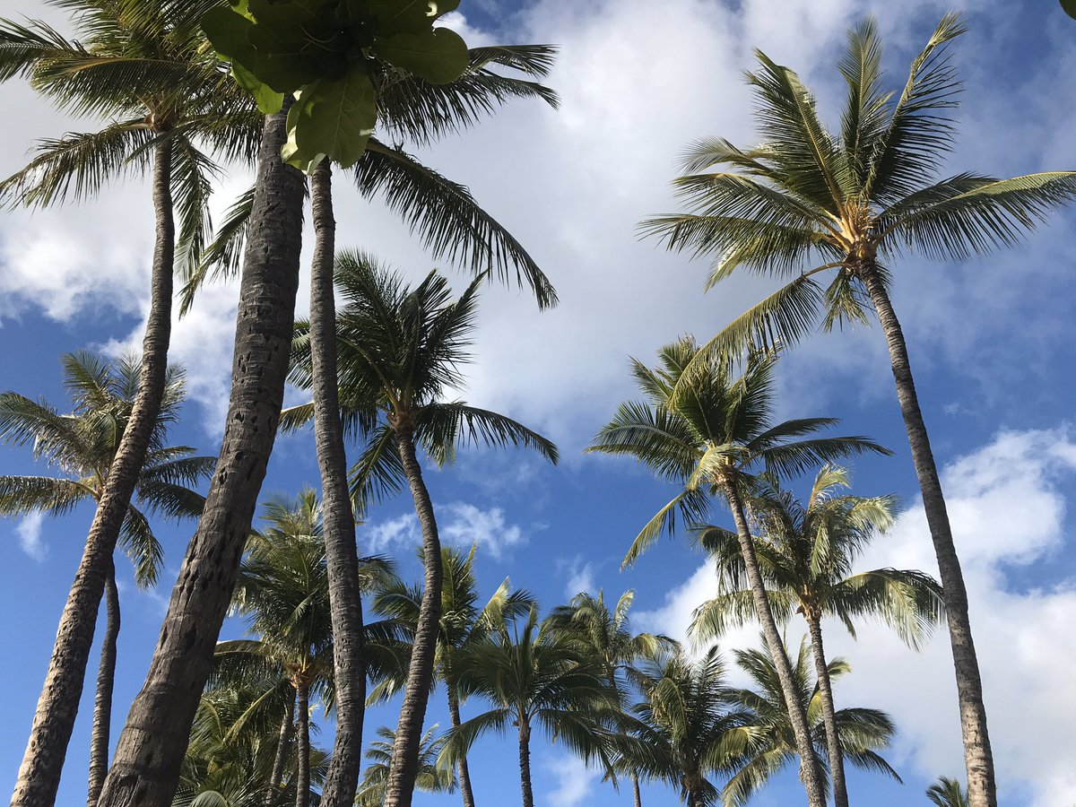 Palm Tree Vibes, all day every day! #goingforit #PalmTrees pic.twitter.com/SSRC9gcyN3